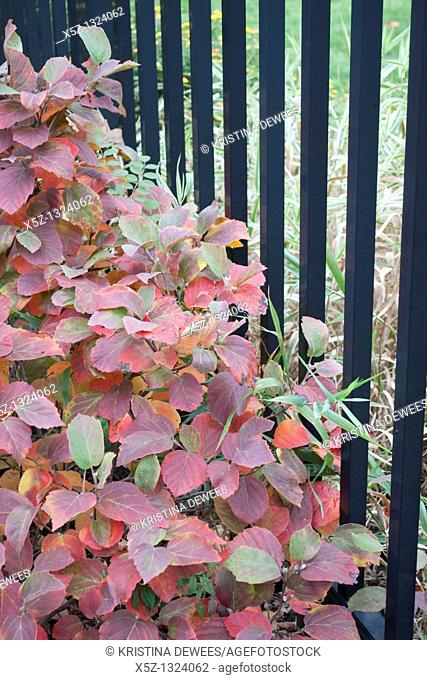 Some red Fall foliage against a black fence
