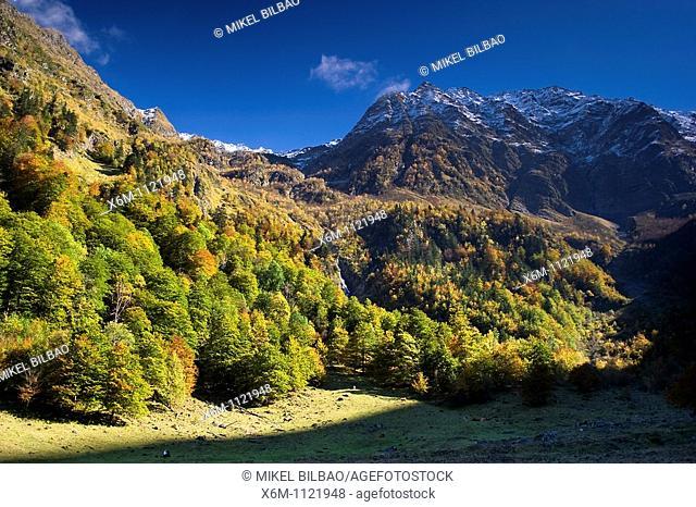 Mountain and forest in autumn  Plan dera Artiga  Artiga de Lin  Aran Valley  Pyrenees mountain range  Lerida province  Catalonia, Spain, Europe
