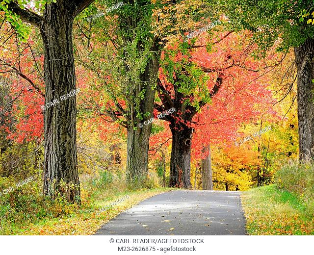A path leads to a bright autumn stand of trees, Pennsylvania, USA