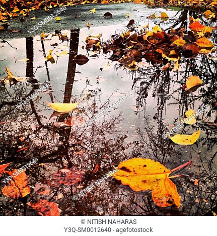 Living power of broken dreams - a puddle with fallen leaves