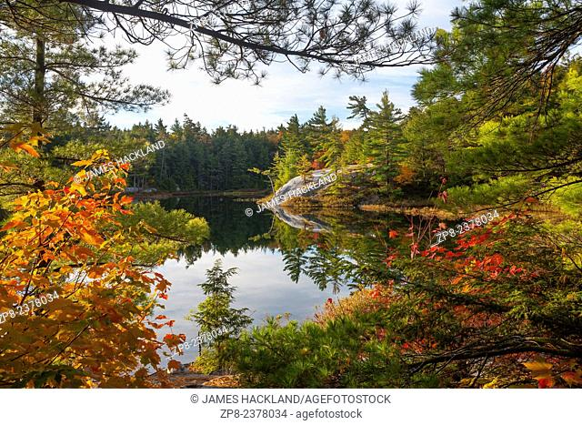 A rocky outcrop is framed by the edge of a forest. Killarney Provincial Park, Ontario, Canada