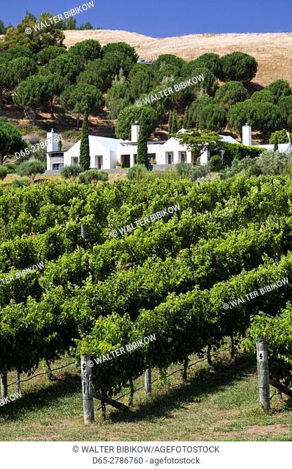 New Zealand, North Island, Hawkes Bay, Havelock North, Black Barn Vineyards Winery
