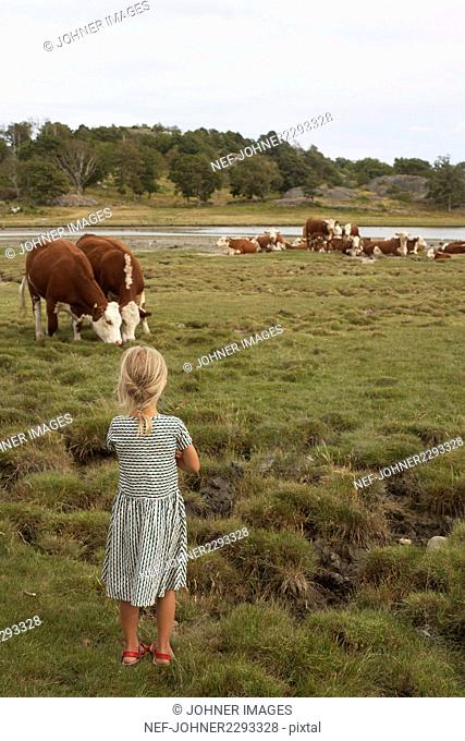 Girl looking at cows grazing in meadow