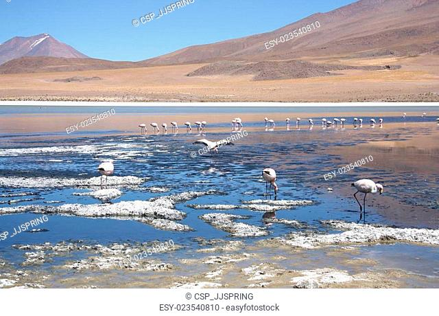 Mountain lake with flamingos