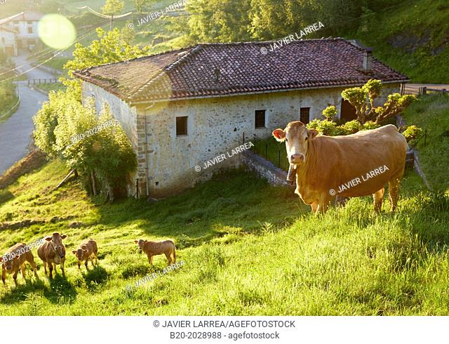 Basque farmhouse. Cows. Arantzazu. Oñati. Gipuzkoa. Basque Country. Spain