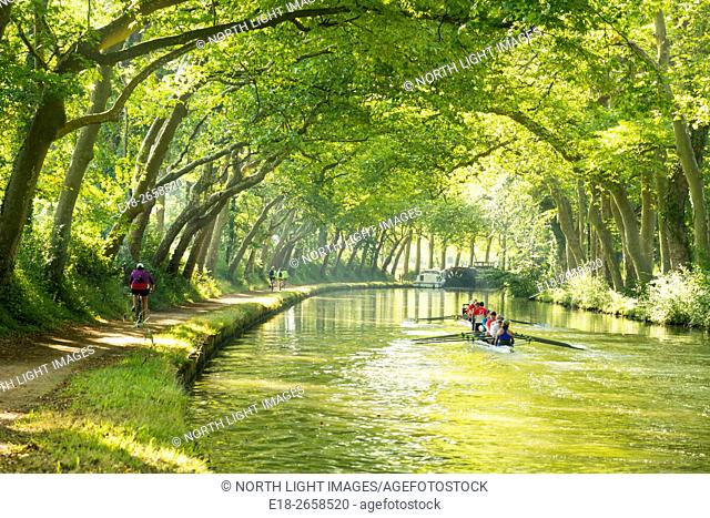 EU, France, Avignonet Lauragais. Under an arching canopy of plane trees, rowers compete in the 240km Ralley du Canal du Midi