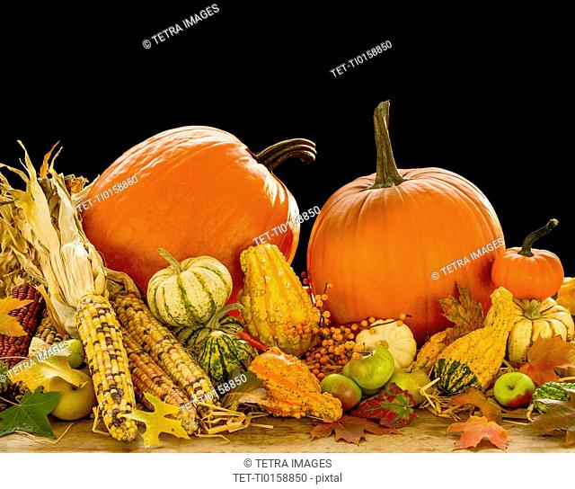 Still life with pumpkins, apples and corn
