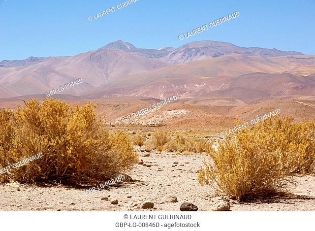 Atacama Desert, Region of Antofagasta, Santiago, Chile