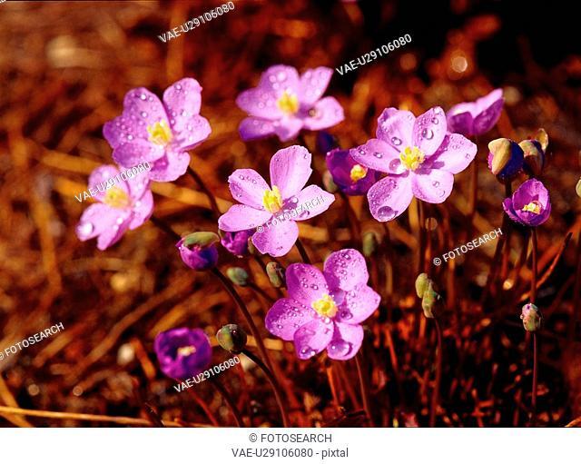 flowers, nature, plants, flower, plant, film