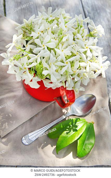 May flowering and harvest jasmine flower