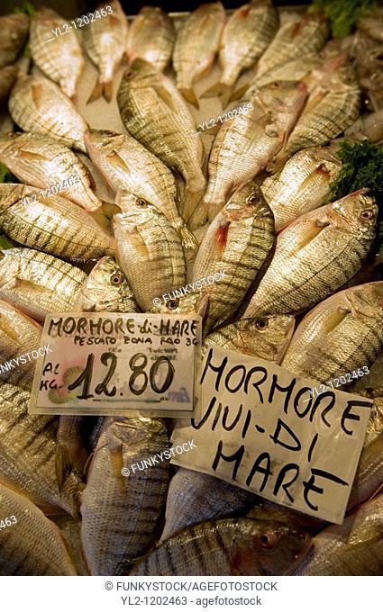 Fresh Mohore fish - Rialto Fish Market - Venice Italy