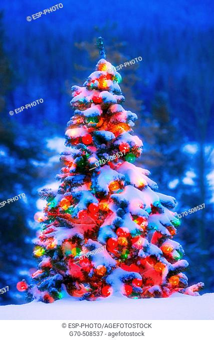 Christmas tree covered in snow with lights outdoors