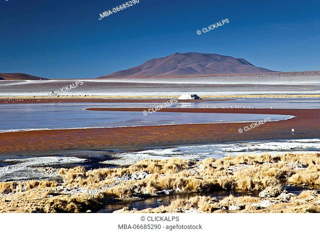 The Laguna Colorada contains borax islands, whose white color contrasts with the reddish color of its waters, which is caused by red sediments and pigmentation...