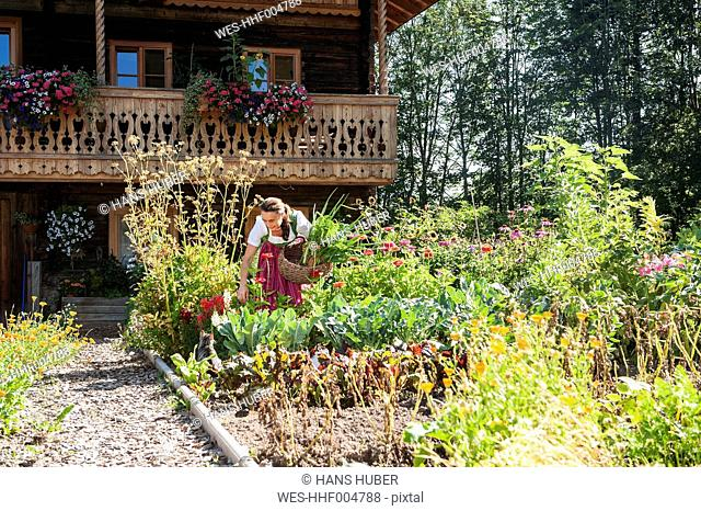 Austria, Altenmarkt, Farmer's woman harvesting vegetables