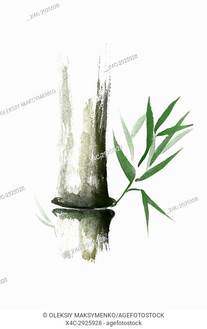 Beautiful Zen painting of bamboo stalk with green leaves. Sumi-e Chinese Japanese black ink illustration isolated on white background