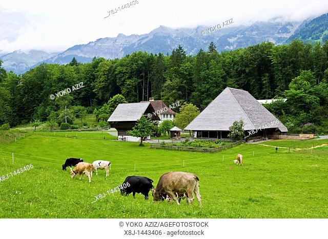 Pasture, Ballenberg museum, Hofstetten, Switzerland