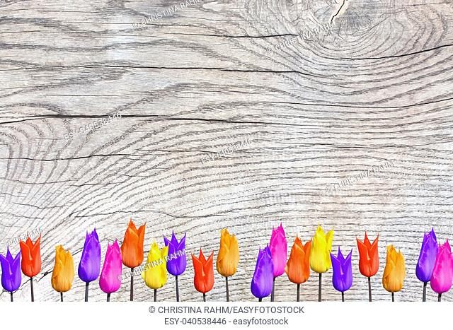 Tulips on wood surface with patina, organic texture background copy space