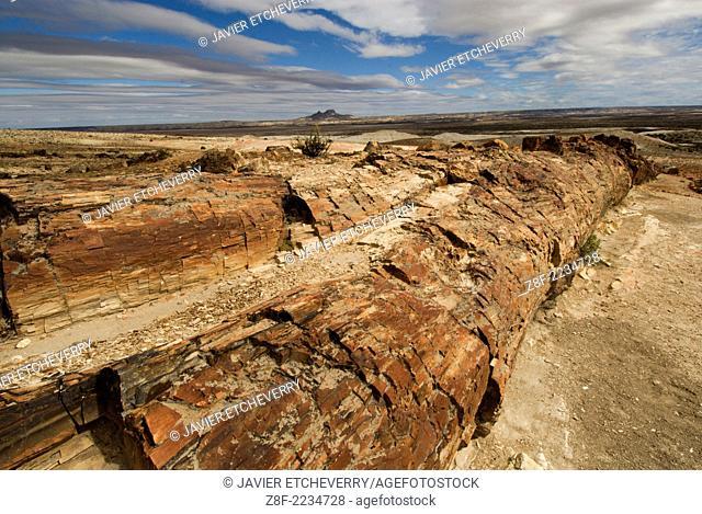 Petrified Forest, Monumento Nacional Bosques Petrificados, Patagonia, Province of Santa Cruz, Argentina
