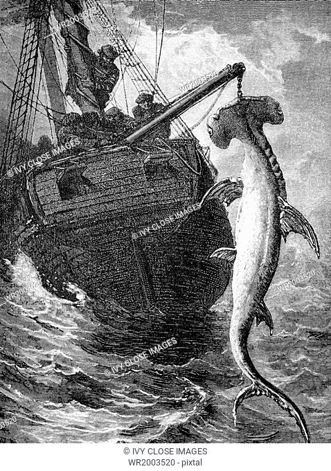This 1861 illustration shows sailors capturing a hammerhead shark off the coast of Africa