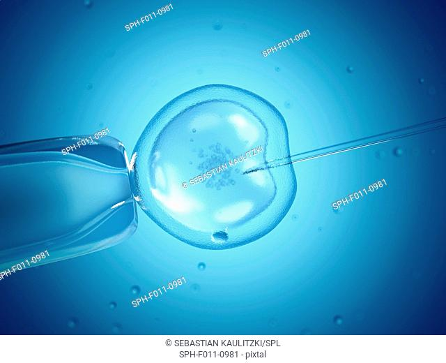 In vitro fertilisation (IVF), computer illustration