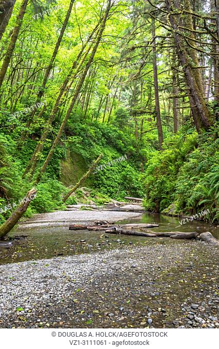 Entrance to Fern Canyon in Prarie Creek Redwoods State Park, California, USA
