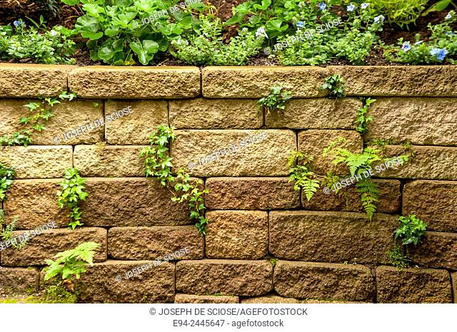 A stone wall with ferns growing out of the joints. Pittsburgh Pennsylvania USA