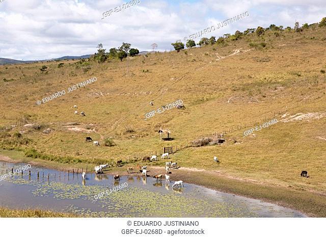 Animals Drinking Water in Dam, Boa Nova, Bahia, Brazil