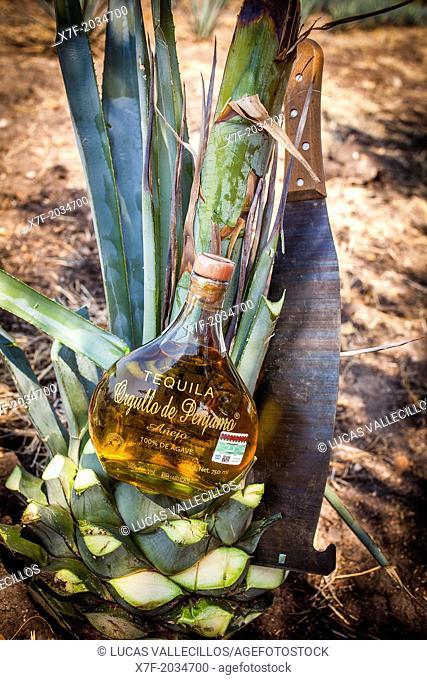 Tequila Orgullo de Penjamo, Penjamo, Guanajuato, Mexico