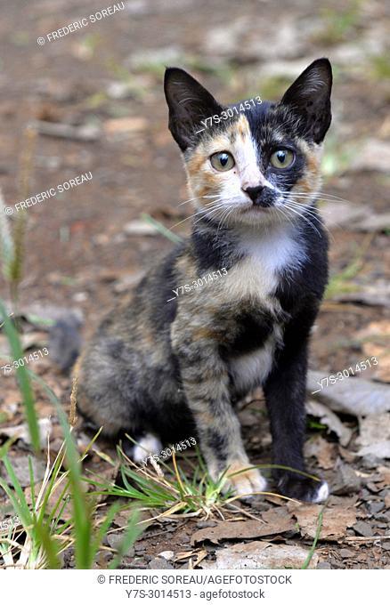 A cat in Cambodia,South East Asia,Asia