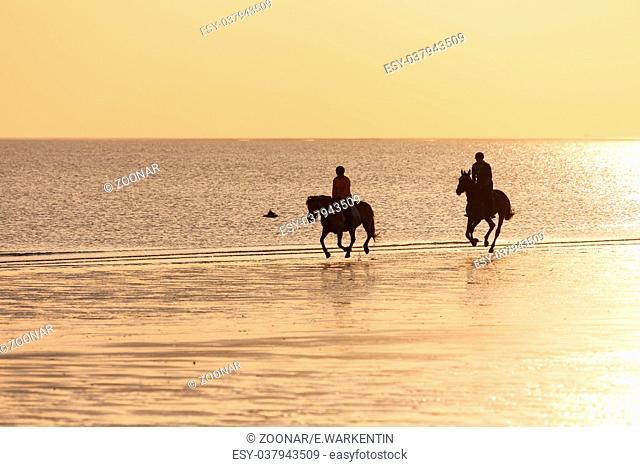 Rider on the beach at sunset