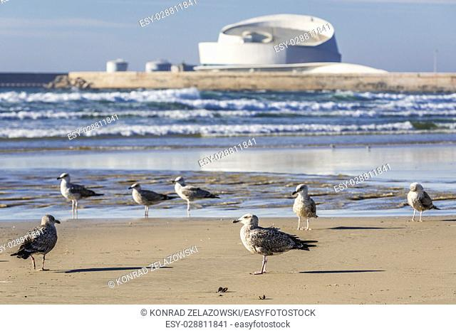 Sea gulls on a beach of Nevogilde civil parish in Porto city, Portugal. Port of Leixoes new Cruise Terminal building in Matosinhos city on background