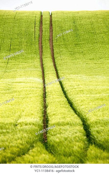 ruts in a cornfield near Eix, France