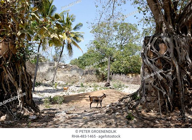Ruins, old town, Ibo Island, Mozambique, Africa
