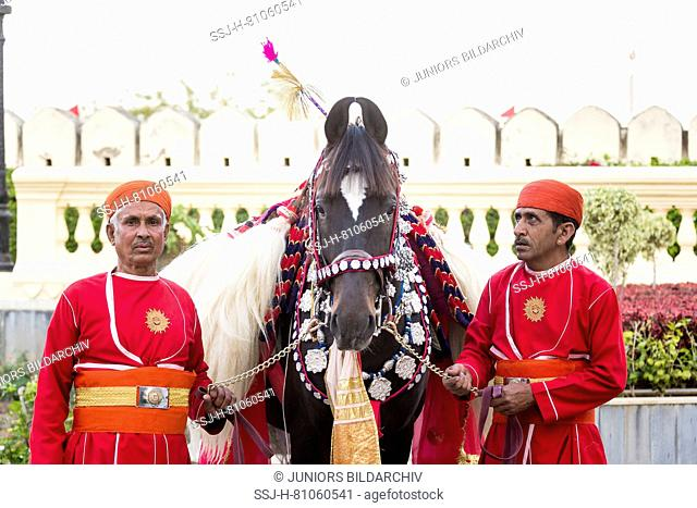 Elaborately decorated Marwari horse with two grooms. Participant in the Holi festival at the City Palace, Udaipur, India