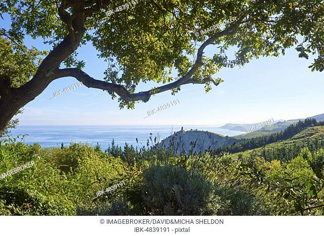 View to the geopark Costa Vasca at the the atlantic ocean between trees next to the Camino del Norte on the way to Deba, coastal path, Way of St