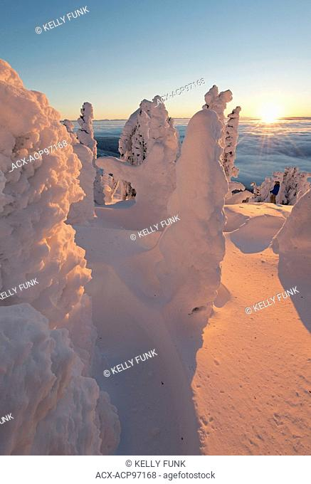 Snow ghosts create a beautiful environment at sunrise at the top of Sun Peaks Resort, Thompson Okangan region, British Columbia, Canada