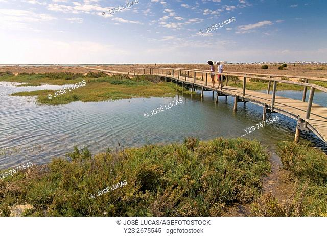 The Odiel Marshes Nature Reserve, Huelva, Region of Andalusia, Spain, Europe