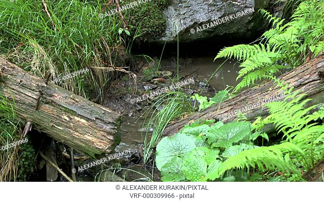 Rain in the forest: a small stream flows among the ferns and fallen trees