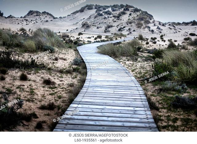 Wooden footbridge, Doñana National Park Huelva province, Andalucia, Spain