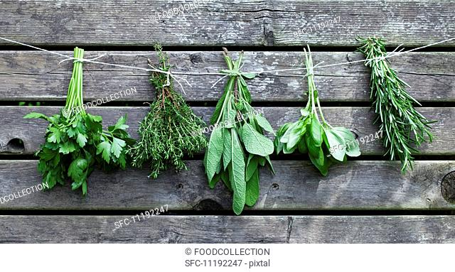 Bunches of herbs hanging against a wooden wall