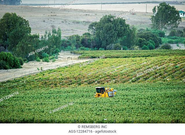 Wine Grape harvest with a mechanical harvester; Stellenbosch, Western Cape, South Africa