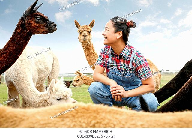 Woman sitting with alpacas, face to face, smiling