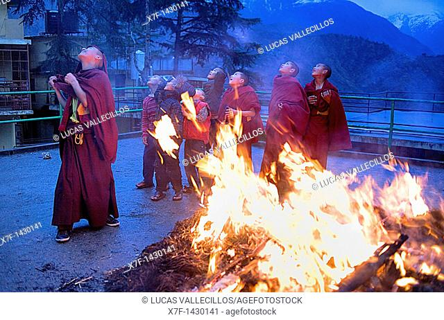 Young monks, ritual to burning evil at Losar new year, in Namgyal Monastery,in Tsuglagkhang complex  McLeod Ganj, Dharamsala, Himachal Pradesh state, India