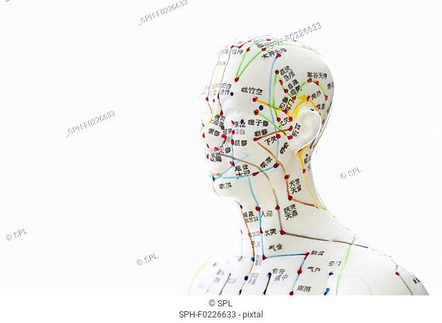 Acupuncture model