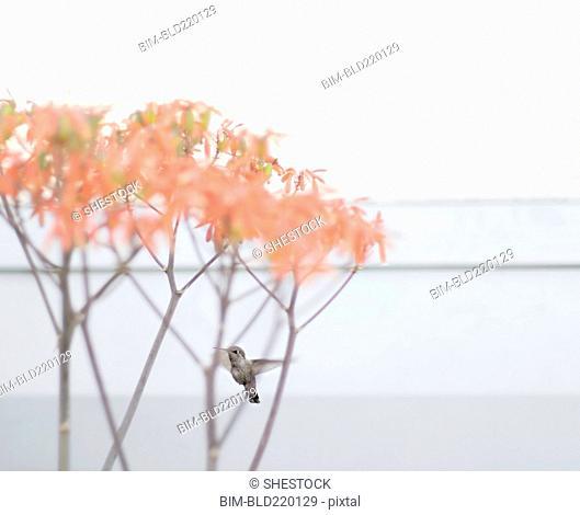 Bird perching on tree branches