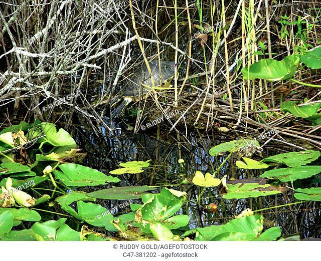 Everglades National Park. Florida. USA
