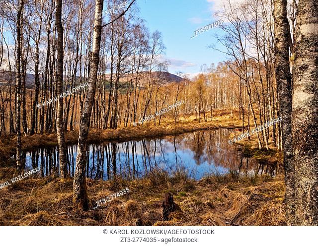 UK, Scotland, Highlands, Forest of the Roy Bridge