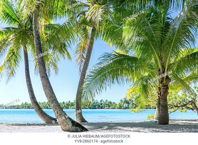 Sea view through palm trees on Moorea island in French Polynesia