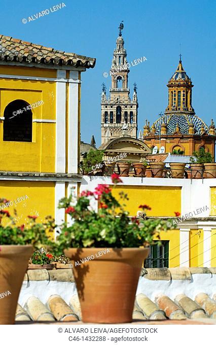 Giralda tower  view from Barrio de la Juderia, City of Seville  Andalucia  Spain