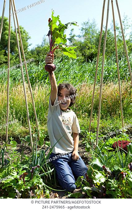 Little boy in the vegetable garden showing a fresh picked red beet